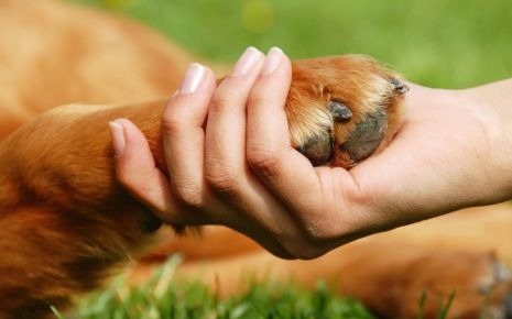 Are Animal Rights As Important As Human Rights?